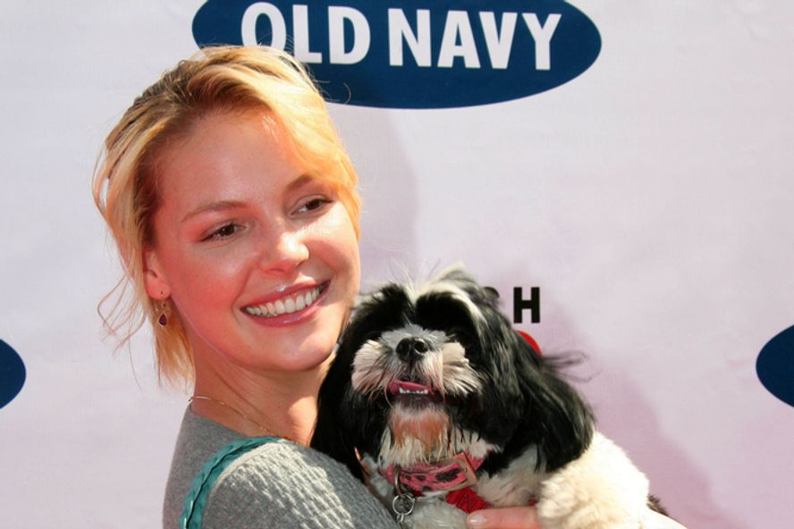 10 Ways Katherine Heigl Can Still Save Her Career!