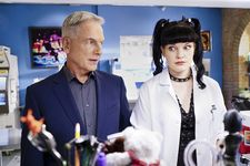 Mark Harmon's Dog Allegedly Caused Rift With Pauley Perrette On NCIS Set