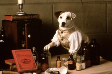 Peter Farrelly Is Producing A Film Based On The '90s TV Series Wishbone