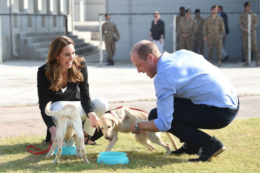 Prince William And Kate Middleton Mourn The Passing Of Family Dog Lupo
